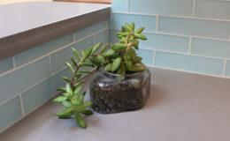 03-Lavine-succulent-900×600